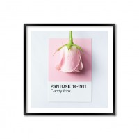 Pantone Candy Pink.