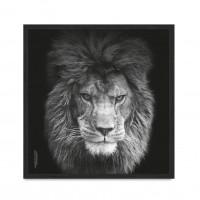 Lion vol 5.