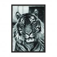 Tiger Black.